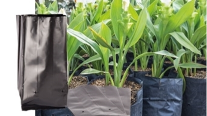 Picture of PLANT NURSERY BAGS